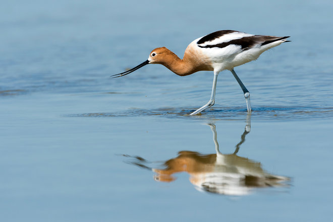 6 Incredible Places to Spot Birds in California