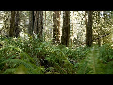 Redwood State and National Parks