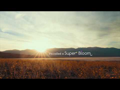 California's Death Valley comes to life in a rare Super Bloom