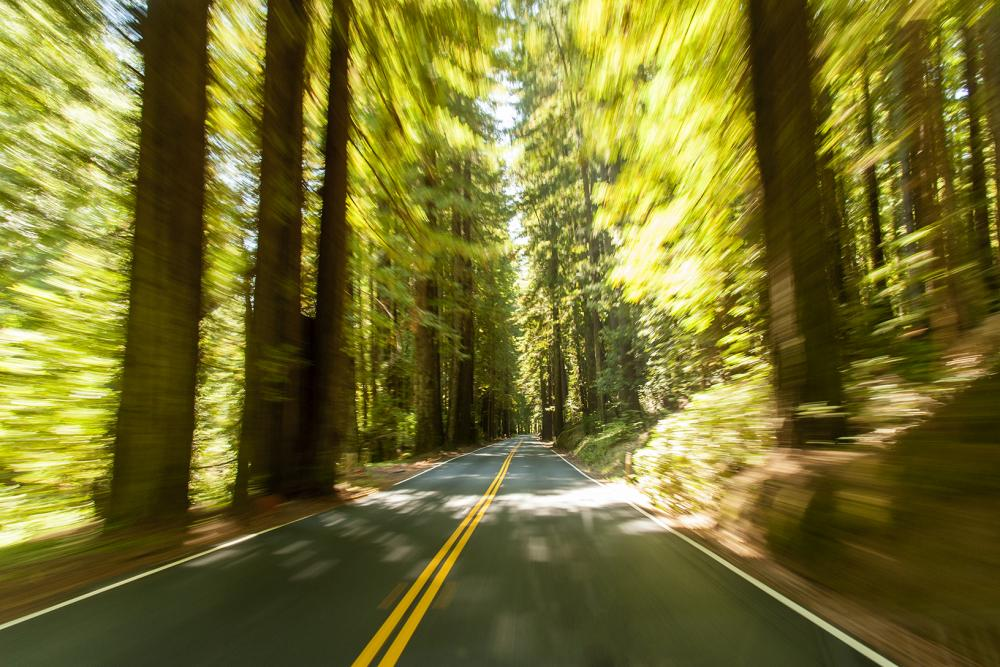 Join Us on a Scenic Road Trip to the Mendocino Coast