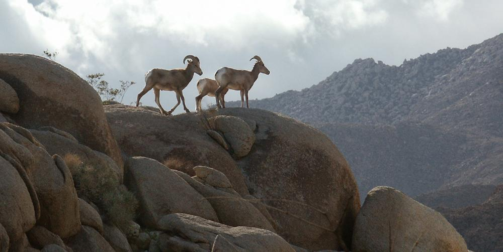 Anza-Borrego State Park guided activities