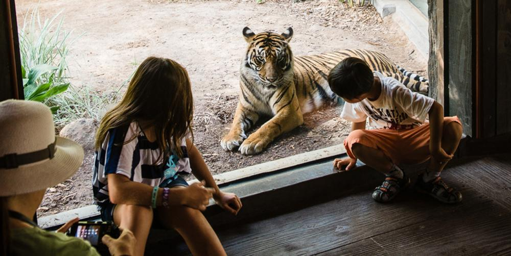 Special Experiences at the San Diego Zoo