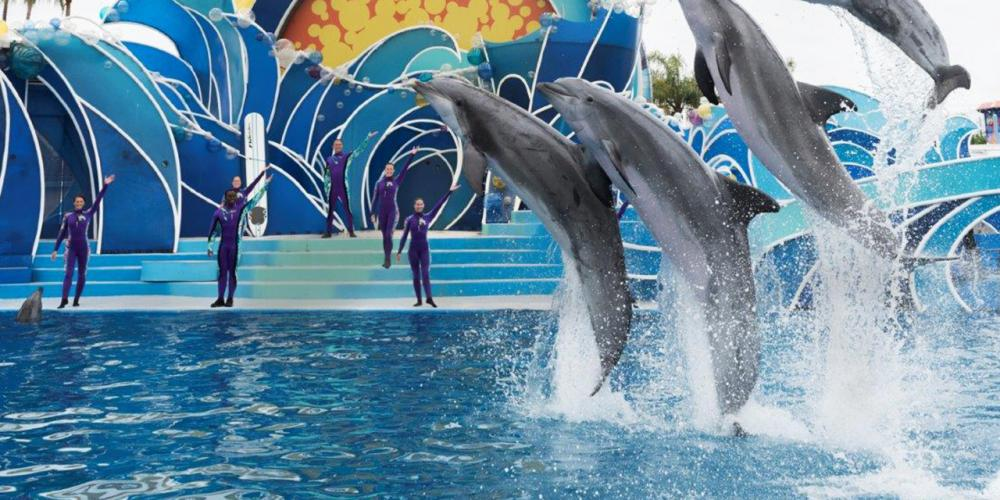 Know Before You Go: SeaWorld San Diego