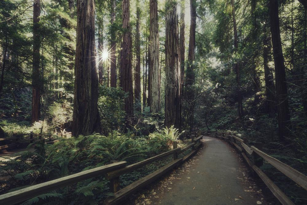 6 Ways to Celebrate Earth Day in California