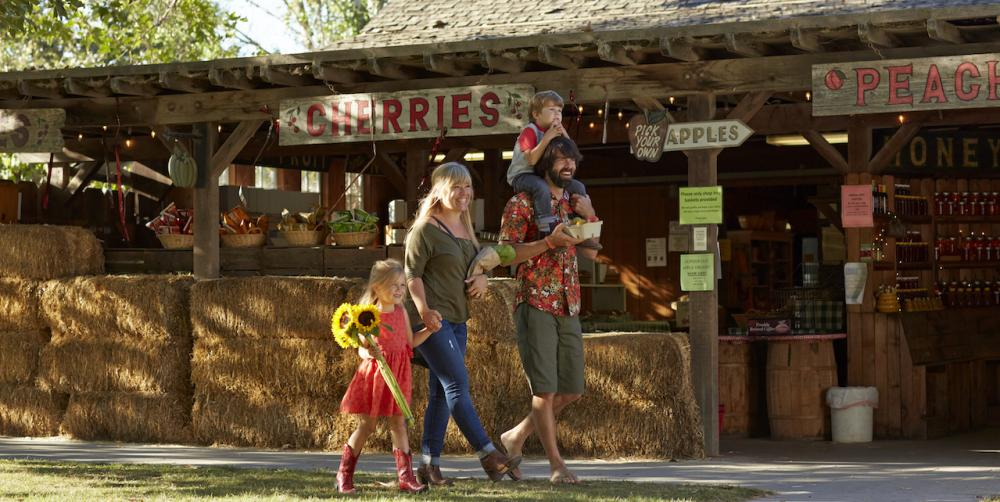 Kid-Friendly Guide to California Road Trips