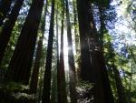 7 tips on visiting Muir Woods in summer