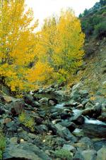 Ebbett's Pass National Scenic byway road trip