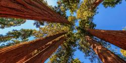 What You Need to Know About California's State and National Parks