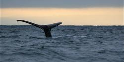 Mendocino Whale Watching