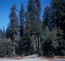 Walks and Hikes in Redwood National Park